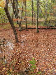 If you need to see AUTUMN LEAVES FLOATING ON WATER you ought to visit A FLOODPLAIN FOREST in THE NORTHERN U.S. in OCTOBER. (Tim Kiser) Tags: 2016 20161029 badriverdrainagebasin badriverwatershed branttownship branttownshipmichigan branttownshipsaginawcountymichigan img6707 lakehurondrainagebasin lakehuronwatershed michigan michigantricities michiganlandscape october october2016 ringwoodforest ringwoodforestcountypark ringwoodforestlandscape saginawbaydrainagebasin saginawbaywatershed saginawcountymichigan saginawcountyparks saginawcountylandscape saginawriverdrainagebasin saginawriverwatershed saginawvalley shiawasseeriverdrainagebasin shiawasseeriverwatershed southforkbadriver southforkbadriverbottomland tricities autumn autumnlandscape autumnleaves autumnleavesfloatingonwater bottomland bottomlandlandscape centralmichigan countypark deadleaves defoliation eastcentralmichigan fall falllandscape fallleaves fallleavesfloatingonwater fallenleaves floodplain floodplainforest floodplainlandscape forestlandscape landscape leaflitter midmichigan park plantlitter riparianarea riparianforest riparianlandscape riverbottom riverbottomlandscape view woodedlandscape woodlandlandscape