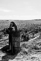Liquid of Life (PJ Reading) Tags: landscapes landscape australian aussie australia farm farmland land afternoon darlingdowns seq toowoomba brisbane qld queensland farming crops water pump irrigation life