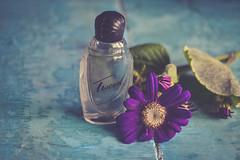 Tweed (Ayeshadows) Tags: purple daisies daisy tweed perfume bottle still life table top texture paint