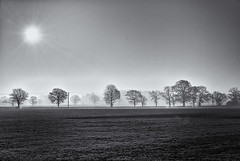 Misty morning B&W (realdelboy) Tags: morning mist surrey burstow davidtrotter siverefex giveadogabonehewillrunoffwithit thatsaboneofcontention