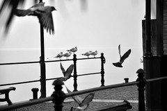 Il volo (Markito87) Tags: italy seagulls white lake black bird birds lago fly photo blackwhite nikon italia grigio foto bn uccelli verona fotografia bianco nero animali gabbiani biancoenero lagodigarda lazise fotografare birdsfly flybirds nikond5000