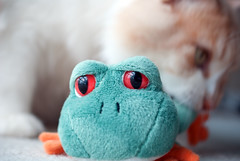 OH OH (Hamid.A) Tags: closeup soft play sad close frog playtime softtoy sadface hunted