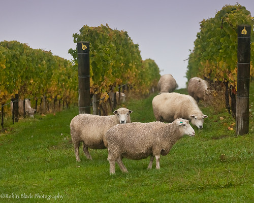 Wine and Wool (Nelson, New Zealand)