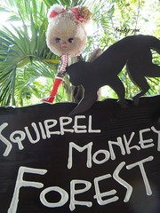 Carmela went to the Squirrel Monkey Forest....