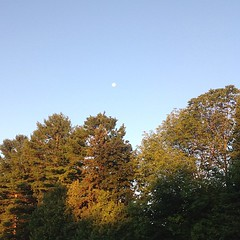 Morning moon (Julep67) Tags: morning sky moon ontario canada square kingston squareformat elmwood julep67 iphoneography august2013 instagramapp uploaded:by=instagram foursquare:venue=4ba78dccf964a520e19c39e3