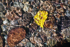 Yellow Leaf  (Explored) (NoJuan) Tags: water lightandshadows ep3 seattlewa thorntoncreek ambientlightgroup urbanwaterway micro43 microfourthirds olympusep3 45200mmpanasonicvario