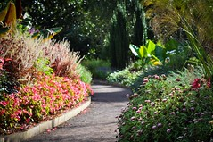 DSC_0238 (tehLEGOman) Tags: flower nature garden nc durham northcarolina duke dukegardens durhamnc dukeuniversity sarahpdukegardens