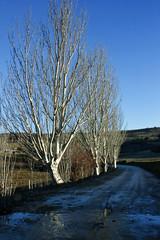 Fuente Hervidero (asenfokarajan) Tags: road blue sky tree azul day camino clear cielo rbol eos450d