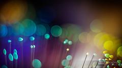 Developed-IMG_2013-12-29-17-11-52 (Still-memories.net) Tags: camera light abstract macro art water canon studio photography drops rainbow bokeh unique smoke flash explosion creative off technical sound speaker liquid collisions highspeed vibration arduino splashes solenoid strobist