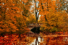 Remembrance (4eye) Tags: autumn poland polska warsaw warszawa saskakępa parkskaryszewski 4eye mygearandme mygearandmepremium mygearandmebronze mygearandmesilver mygearandmegold mygearandmeplatinum mygearandmediamond