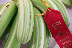 Ae Ae Striped Bananas (Emily Miller Kauai) Tags: county red fair bananas kauai prize ribbon striped aeae