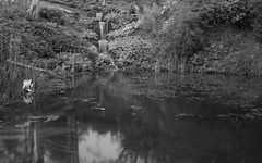 Ness Gardens Waterfall/Pond (Capturing The Negative) Tags: longexposure blackandwhite white black fall water gardens canon garden blackwhite waterfall spring long exposure cloudy over overcast cast april ness density neutral ndfilter nessgardens neutraldensity nessgarden canon650d