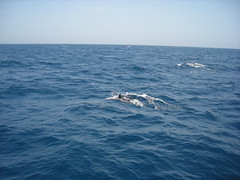 DSCN4392 (Fort Bragg Family & MWR) Tags: deepsea deepseafishing deepseafishingtrip