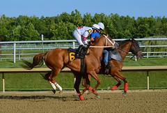 "2015-07-31 (69) r6 Jevian Toledo on # 6 Tough Weather (JLeeFleenor) Tags: photos photography md marylandracing marylandhorseracing laurelpark jockey جُوكِي ""赛马骑师"" jinete ""競馬騎手"" dżokej jocheu คนขี่ม้าแข่ง jóquei žokej kilparatsastaja rennreiter fantino ""경마 기수"" жокей jokey người horses thoroughbreds equine equestrian cheval cavalo cavallo cavall caballo pferd paard perd hevonen hest hestur cal kon konj beygir capall ceffyl cuddy yarraman faras alogo soos kuda uma pfeerd koin حصان кон 马 häst άλογο סוס घोड़ा 馬 koń лошадь maryland"