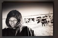 Nenets,Mitrofan,l'uomo più anziano del campo,,Siberia 2016.Foto di Ragnar Axelsson (Sherpa1963) Tags: artico siberia ragnaraxelsson bn fotografia cambiamenticlimatici ghiaccio inuit