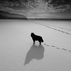 (Svein Nordrum) Tags: bw bnw blackandwhite square squareformat snow winter cold lake oslo dog light noir nero scenery shadow composition landscape outdoors 5dmiv