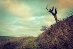 Strange tree (Tom Zander) Tags: tree trees baum bäume baeume land landschaft wolken wolke cloud clouds sky himmel gras grass vintage retro sony alpha tom zander 19mm f28 sigma way weg wege ways pfad pfade feldweg fieldway