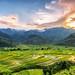 Cao Pha valley, Mu Cang Chai