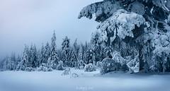 Finding trolls (Ron Jansen - EyeSeeLight Photography) Tags: kongsberg buskerud norway haus sachsen knuten knutefjell snow winter cold morning mist misty troll trolls ice blue tones trolsk tree trees branches