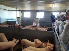 Schweinestall-005