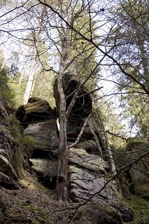 Sandstein und Baum / Sandstone and tree