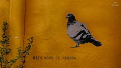 ... ou pas ! (Fred&rique) Tags: lumixfz1000 photoshop hdr pigeon tag graffiti mur dieu orange