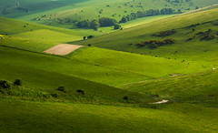 Shades of Green (GlennDriver) Tags: park uk trees england green rural way downs sussex sheep britain south bottom farming east ridge kingston national valley stump gb fields lush agriculture grazing southdowns