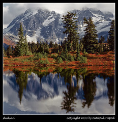 shuksan (Intrepid Tripod) Tags: trees red mountain clouds reflections square heather 120film fallfoliage evergreens 6x7 1985 northcascades mtshuksan rb67 mamiyarb67 vps october6 vericolor colornegativefilm mtbakernationalforest highwoodlake