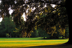 Meise - Warm Evening Sunlight (Drriss & Marrionn) Tags: park flowers sunlight grass landscape flora europe belgium conservatory greenery botanicalgarden meise nationalbotanicgardenofbelgium greenbeautyforlife