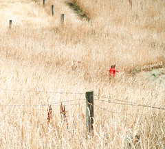 The Joy of Long Grass (Steve Taylor (Photography)) Tags: park boy red newzealand christchurch field grass yellow fence track child post path coat hill running canterbury downhill nz southisland quarry halswell fullpelt