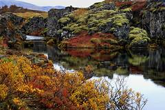 Colourful autumn at Thingvellir, Iceland (fredschalk) Tags: autumn trees red fall leaves river iceland moss pond stream colours heather worldheritagesite autumncolours vegetation birch haust thingvellir þingvellir ísland mosi fissure birchtrees fallcolours litir midatlanticridge haustlitir explored redautumn þingvallakirkja laufblöð gjá þjóðgarður haustáþingvöllum nationalparkthingvellir þingvellirþjóðgarður nationalparkþingvellir fredschalk autumnatthingvellir heathervegetation birchvegetation
