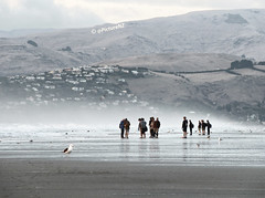 The School Trip (Steve Taylor (Photography)) Tags: trip school houses sea newzealand christchurch cold bird beach boys lines misty children coast sand legs gull teenagers canterbury backpack southisland lowtide teachers atmospheric seamist newbrighton porthills sumnersilhouette