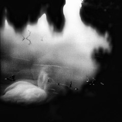 de swan (Tunguska RdM) Tags: light shadow white black film lost sadness swan sad  ofportalsandparallelworlds tunguskardm