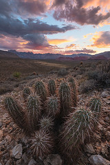 Creativity - Monsoon Sunset (D Breezy - davidthompsonphotography.com) Tags: redrockcanyon travel summer cactus usa mountains landscape creativity nikon desert lasvegas hiking nevada monsoon barrelcactus d800e