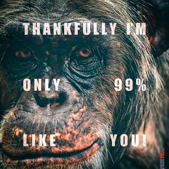 Humanity  Human (PRJCT576) Tags: face fur eyes chimp skin humanity remix lips occhi 99 dna pelle huma pelo rmx faccia umano labbra umanit scimpanz