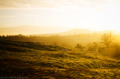 _MDA8096smlwm (Mike Davis Photography1) Tags: beautiful misty sunrise dawn golden worcestershire abberley menithwood