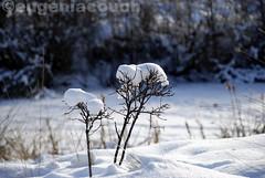 coleccion winter 2013 (Eugenia Couoh) Tags: city blue winter light white mountain canada cold tree nature wheel thecity blues paisaje invierno nikkor snowfall twiggs feelings nevado winterlandscape melancolia therockies winterblues