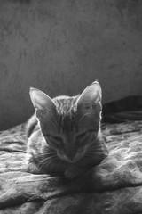 Always sleeping (laurw) Tags: orange cute animal animals cat little gato naranja