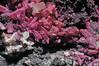 spherocobaltite, quartz (géry60) Tags: agoudalcentrequarry agoudal bouazerdistrictbouazzerdistrict tazenakht ouarzazateprovince morocco soussmassadraâregion spherocobaltite sphaerocobaltite quartz