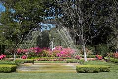 Spring Fountain (wyojones) Tags: flowers trees usa green water fountain pool grass statue garden spring texas azaleas lawn houston hedge np bayoubend imahogg houstonmuseumoffinearts wyojones