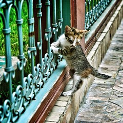 Kitten (PY 1875) Tags: africa street nikon morocco marrakech marrakesh dslr kasbah d5100 uploaded:by=flickrmobile flickriosapp:filter=nofilter