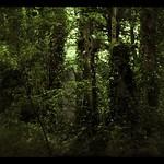 Newington Jungle