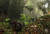 Mushroom.. (Kios Photography) Tags: naturaleza nature oaxaca sierrajuarez fotografo ecoturismo sierranorte ixtlan ixtlandejuarez ecoturixtlan kiosgarcia kiosphotography