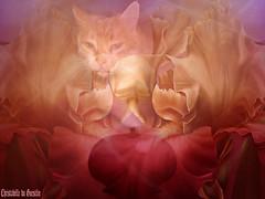 PITCHOUNET REMERCI TOUS LES AMIS POUR LES VISITES (  2 500 0OO )    ET  CHRISTABELLE ! (christabelle12300 -(très très peu présente )) Tags: chat fleurs yourbestphotos coffeetime