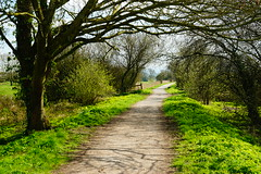 With Spring in Your Steps (JamieHaugh) Tags: yatton northsomerset strawberryline england sony a6000 spring trees color outdoors grass path landscape green uk nature britain