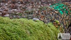Moos und Pilze auf dem Baumstamm