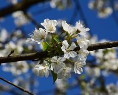 Flowers of spring (only_sepp) Tags: primavera fiori simplysuperb allnaturesparadise
