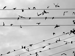 haos (Darek Drapala) Tags: haos birds industrial nature sky bw blackwhite blackandwhite panasonic poland polska panasonicg5