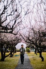 Sanrokugama :Plum Blossoms (Nazra Zahri) Tags: plumblossoms spring vscofilm bizen okayama japan 2017 raw pink portrait japanese asian man raining umbrella