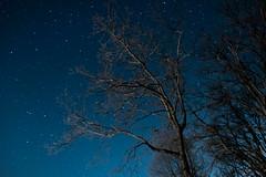 Arbre solitaire (LePitchoun) Tags: night stars star sky blue orange xt2 xt xt1 xt20 fuji fujifilm 1855 18mm f2 8 long exposure caravane trucks fire friends friend barbecue sausage eat young people light galaxy voie lactée étoiles etoile étoile etoiles nuit jour hiver automne soir rencontre